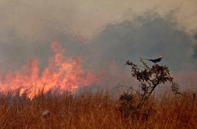 Bushfire1_browse